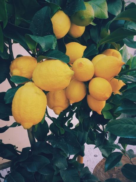 Nadrežte citrón adajte ho do spálne. Pýtate sa prečo